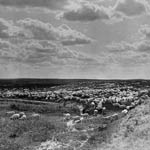 Photograph of a large flock of sheep on the prairies, Saskatchewan, circa 1910